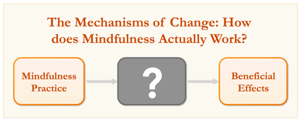 Mechanisms of Change